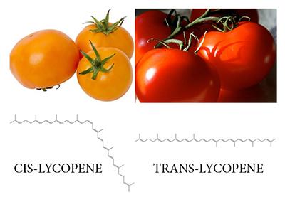 lycopene tomatoes