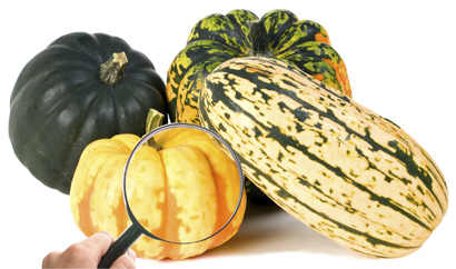 research_squash_photo.jpg