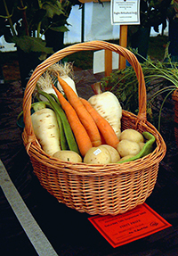 Root Veggies in a Basket