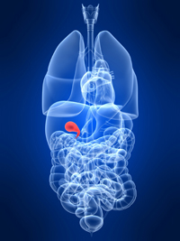gallbladder in situ