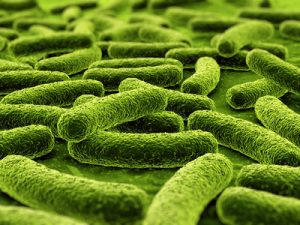 , Organization: Possible key to bacterial invasion for some colon cancers