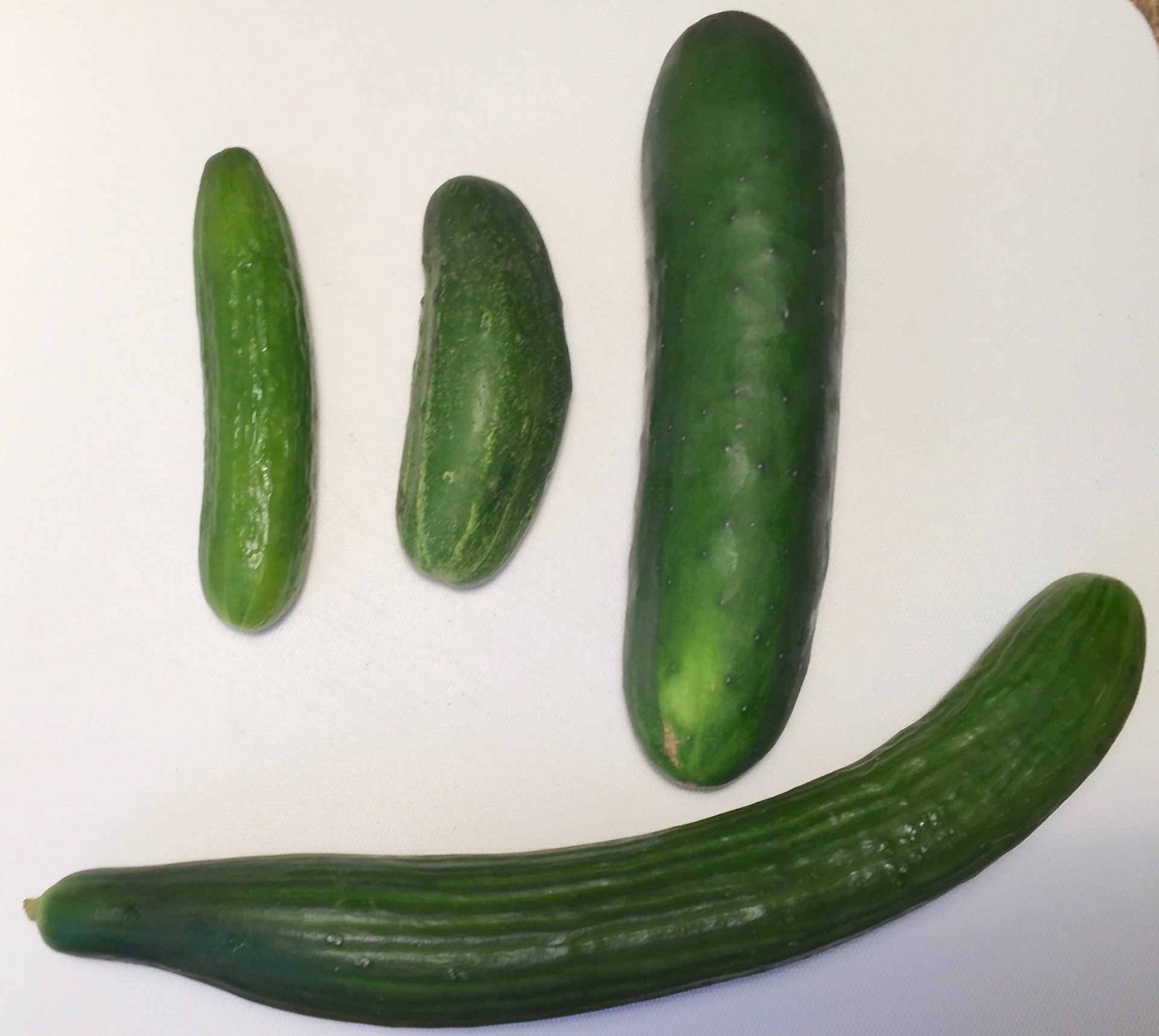 Four kinds of cucumbers