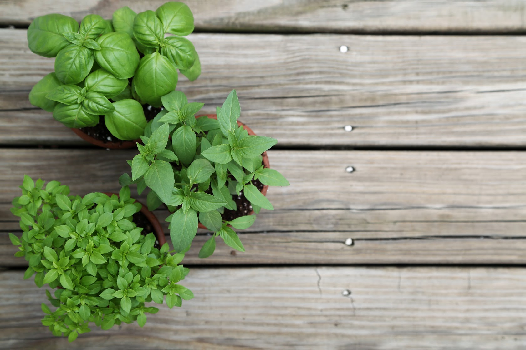 snack, Flavor Up Your Family's Snacks with Herbs and Spices