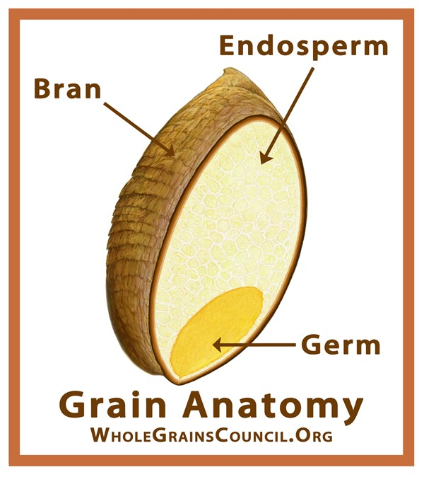 What is a whole grain food