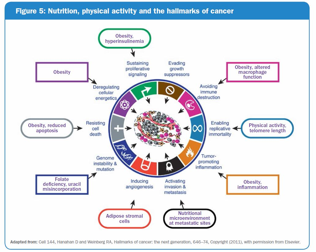 Figure 5: Nutrition, physical activity, and the hallmarks of cancer infographic