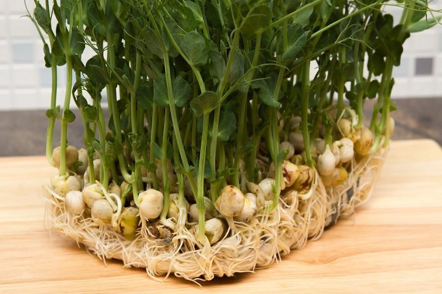 spring vegetables, Savoring Spring Vegetables